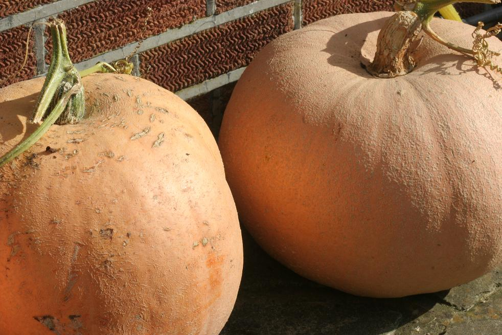 pumpkins-autumn-harvest.jpg