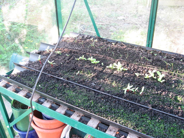 seedlings-in-guttering.jpg